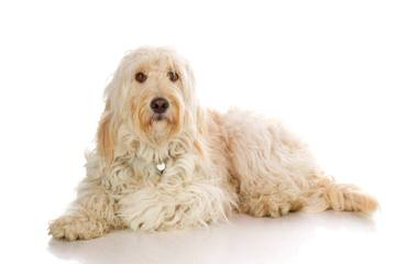 Poodles N Doodles - Dog Breeders