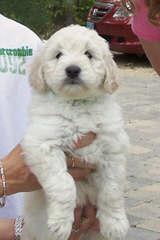 pups4kids, inc. - Dog Breeders