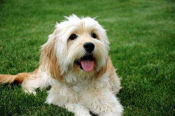 Petigree - Dog Breeders