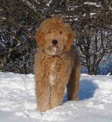Pine River Kennel .Please Read Our Site. Beware Of Who Your Buying From. - Dog Breeders