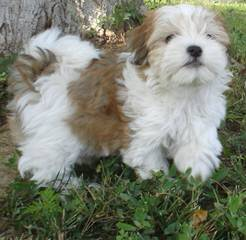 Patricia - Dog Breeders