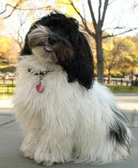 Casa O Kamolot Kennels - Dog Breeders