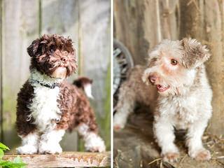 Moorea Havanese – Fine Havanese – Ny/Ct/Ma - Dog Breeders