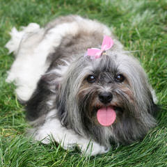 Dog Breeders in Mississippi / Puppies For Sale in Mississippi