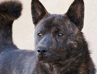 Cinco Deseos Ranch Livestock Guardian Dogs - Dog Breeders