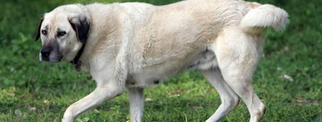 Country Charm Farm LLC - Dog Breeders