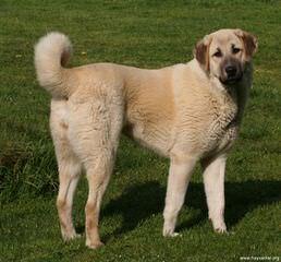 Banks Mountain Farm - Dog Breeders