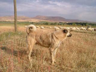 Rayburne Ridge Farm - Dog Breeders