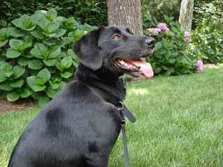 Mercedes - Dog Breeders