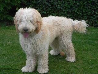 Ann Bankert - Dog Breeders