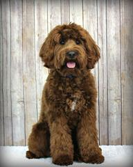Dog Breeders In South Carolina Puppies For Sale In South