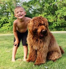 4 Paws Puppies Raises F1b Labradoodles And Australian Multi Gen Puppies! - Dog Breeders