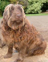 Ragdolldooodles - Dog Breeders