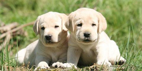 Jurgerson's Kennel - Dog Breeders