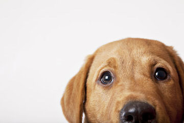 Peggy Snyder - Dog Breeders