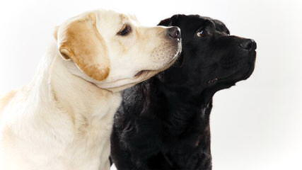 Hoerter's Gander Acres - Dog Breeders