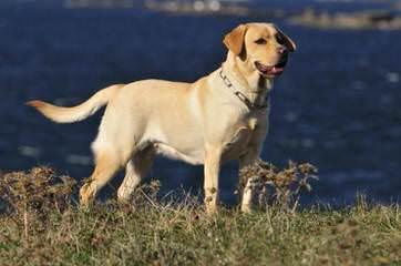 Balsam Branch Kennel - Dog Breeders