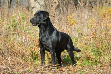 Retrievers on the Red River - Dog Breeders
