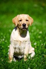 Colorado Puppies - Dog Breeders
