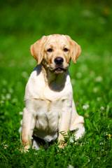 Tracy & Joey Huff - Dog Breeders