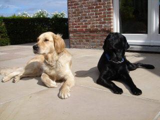 Razzle Dazzle Labradors - Dog Breeders