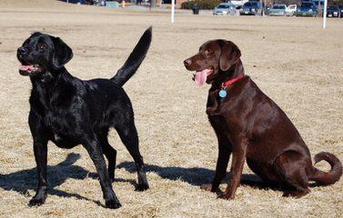 Oldsquaw kennels - Dog Breeders
