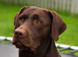 Kylers Field & Marsh kennels - Dog Breeders