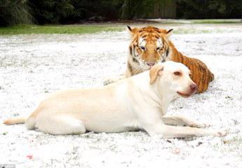 Nathalie Gillespie - Dog Breeders