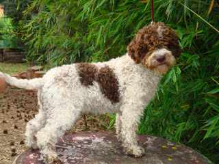 Fiume Kennels - Dog Breeders