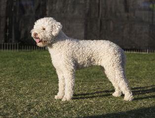 Vilmantas Misius - Dog Breeders