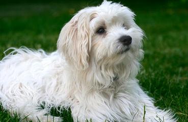 Thomas Kennel - Dog Breeders