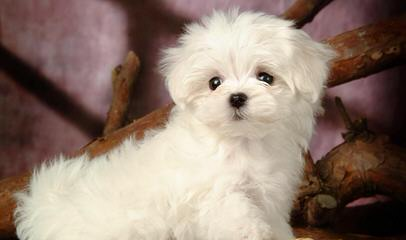 Puppies Available - Dog and Puppy Pictures
