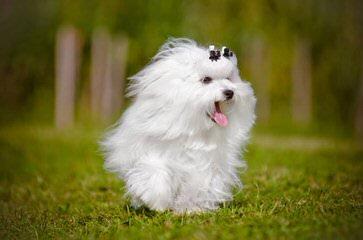 Dogwood Kennel - Dog Breeders