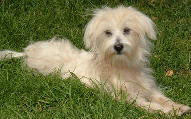 Krs Pups - Dog Breeders