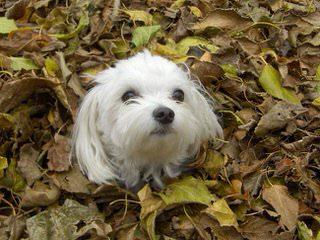 Happy Lil Pawz - Dog Breeders