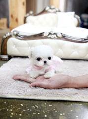 Rc Kennel - Dog Breeders