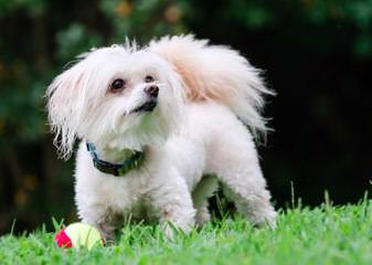 Puppy Tails - Dog Breeders