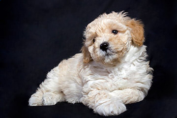 Small Gifts - Dog Breeders