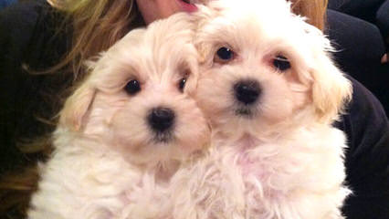 Atender1's Puppies - Dog Breeders
