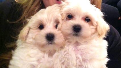 Valley Puppy Paws - Dog Breeders