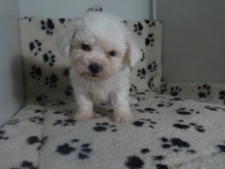 Rescue/Rehome - Dog Breeders