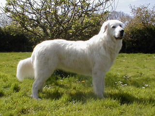 UP Woodland Farm - Dog Breeders