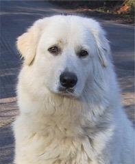 Pab16 - Dog Breeders