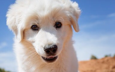 Weesner Meadow - Dog Breeders