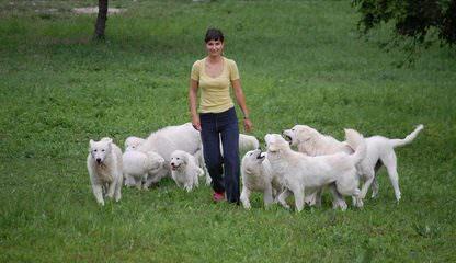 Mrs. Frogel - Dog Breeders