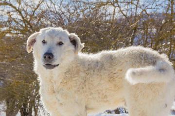 Mareematogoodhome - Dog Breeders