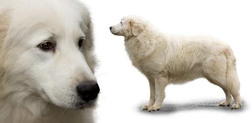 Parcodaini - Dog Breeders