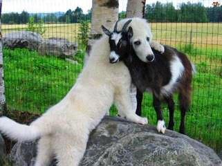 Allevamento del Montelarco - Dog Breeders