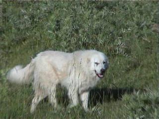Allevamento della Collina di Revigliasco - Dog and Puppy Pictures
