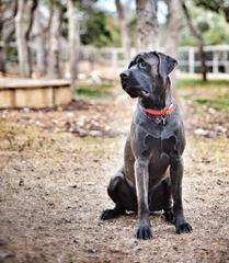 Marshalls - Dog Breeders